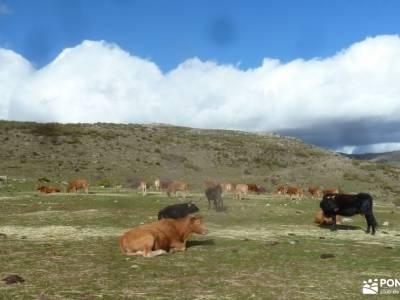 Nacimiento Río Cofio - Comida Navidad;viajes naturaleza salvaje senderismo para mayores de 60 viaje